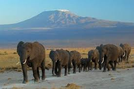 cloning woolly mammoths u0027s ecology stupid scientific