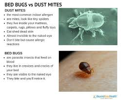 natural bed bug remedies bed bugs vs dust mites insects pinterest insects