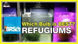 best led refugium light testing chaetomorpha part ii what really happened and what s next