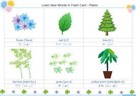 plants flash card free plants flash card templates