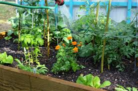 best vegetable gardening ideas for beginners guidance u2014 emerson