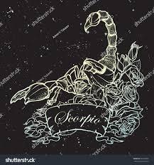 zodiac sign scorpio detailed realistic scorpio stock vector
