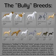 american pit bull terrier vs american staffordshire terrier what is the difference between american bully and american pit
