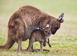 south australia u0027s adventures of a lifetime get away to kangaroo