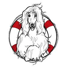 afghan hound breeders new york afghan hound rescue of california animal shelters redwood city