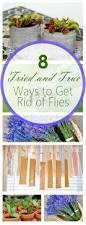 best 25 get rid of flies ideas on pinterest flies repellent