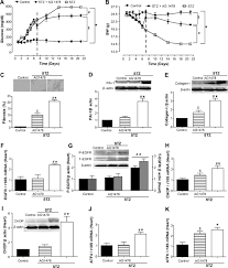 a novel role for epidermal growth factor receptor tyrosine kinase download figure