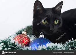 beautiful black cat lies on the christmas ornaments decorations