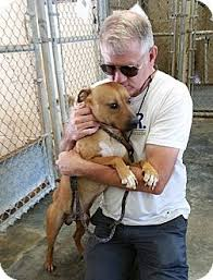 afghan hound adoption florida tyler adopted dog jacksonville fl black mouth cur basset
