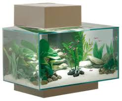 Fluval Edge Aquascape 6 Gallon Fluval Edge Pico Reefs Nano Reef Com Community