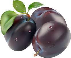 plum clipart plumclipart fruit clip art photo downloadclipart org