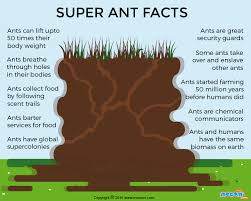 ants are social insects live in large groups called colonies