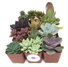Succulent Plant Succulents U2013 Easy To Grow Bulbs