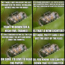 Misunderstood Spider Meme 16 Pics - i never kill spiders in my house i think i 109462751 added by
