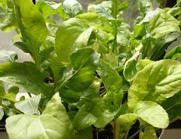 vegetables that grow well in shade
