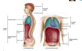 Human Ear Anatomy Quiz Anatomy Quiz Human Anatomy 110 With Munn At Metropolitan