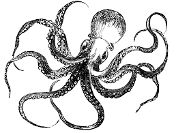 clipart octopus black and white free clipart octopus black and white