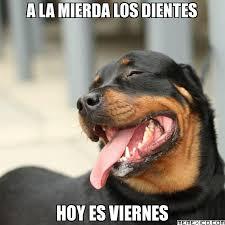 imagenes graciosas viernes imagenes de animales graciosos con frases lindas de feliz viernes
