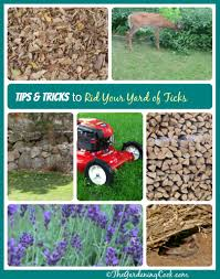 How To Have Chickens In Your Backyard by How To Get Rid Of Ticks Around Your Yard The Gardening Cook