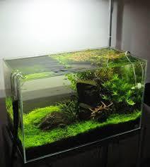 tetrascape designs 20 gallon freshwater planted tank