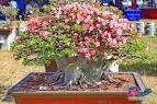 Bloggang.com : : ผู้เฒ่า บ้านบางแค : ชวนชม สวยๆจากงานประกวดชวนชม อ ...