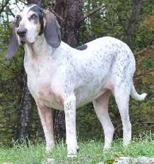 dog breeds list g the world u0027s canine breeds beginning with the