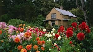 wallpaper flowers gardens