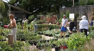 Botanic Garden Santa Barbara Fall For Natives At The Santa Barbara Botanic Garden Edhat