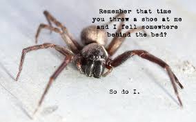 Spider Meme Misunderstood Spider Meme - vengeful spider the weeklings