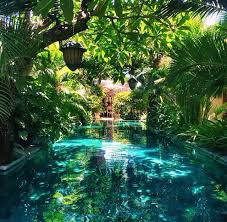 best 25 tropical backyard ideas on pinterest tropical backyard