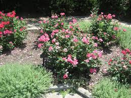 Garden Growing Zones - cleveland area planting zones