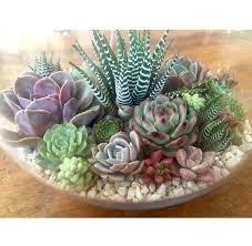 succulent arrangements succulent arrangement ideas succulent more succulent plant