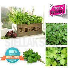 Indoor Herb Pots Window Box - kitchen herb pots ebay