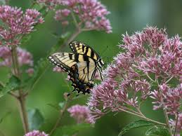 native plants madagascar a charlotte garden native plants of the southeast u2014we have a winner