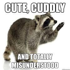 Funny Raccoon Meme - rascally raccoon memes quickmeme