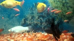 Home Aquarium Home Aquarium Fish Tank With Different Types Of Fish Youtube