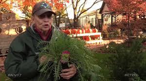 winterize your garden youtube