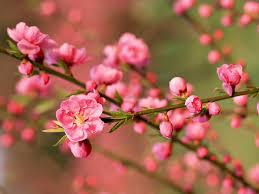 Flower Pictures Flower Green Nature Fresh Blossom Cherry Forever Love New