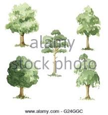 different types of green trees illustration stock vector art