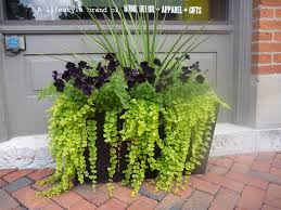 Flowering Patio Plants Best 25 Plants For Shade Ideas On Pinterest Shade Plants Best