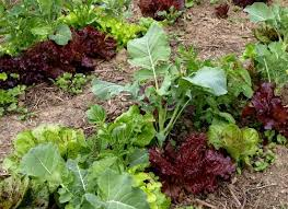 planning a garden the benefits of companion planting organic