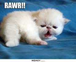 Cute Baby Meme - a cute white kitten memey com