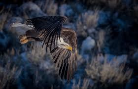 Massachusetts wildlife tours images Jackson hole grand teton and yellowstone photography tours jpg
