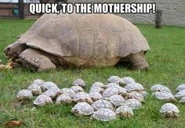 Reptile Memes - 15 hilarious turtle memes i can has cheezburger