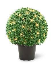 national tree company mini boxwood shaped topiary tree in