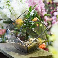 polyhedron glass flower box tabletop geometric terrarium plants