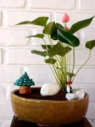 Indoor Flowering Plants by Shop For Indoor Flowering Plants Www Mudfingers Com