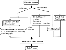 identification of pathogens by mass spectrometry clinical chemistry