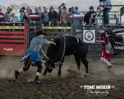 backyard bull riders online