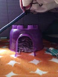 Best Bedding For Rats How To Properly Set Up A Rat Cage The Rat Lady